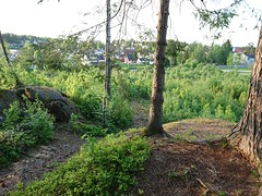 Korsegård skogen