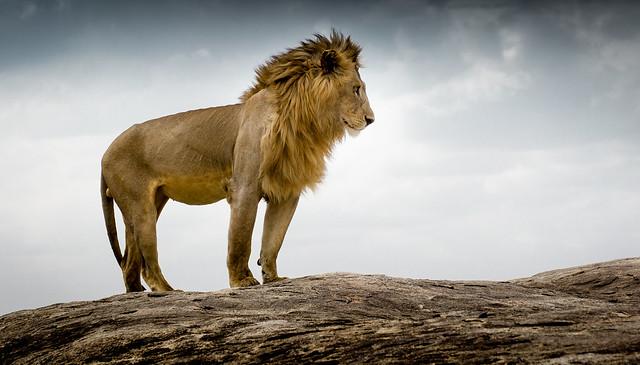 King on Kopjes