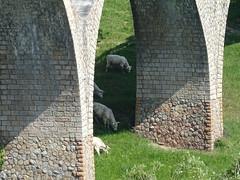Sous le pont - Photo of Neulise