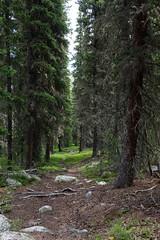 Walker Prairie, Bighorn National Forest, WY, USA.