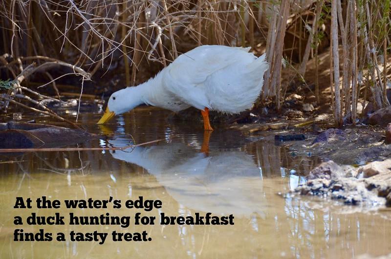HAIGA.duckfast