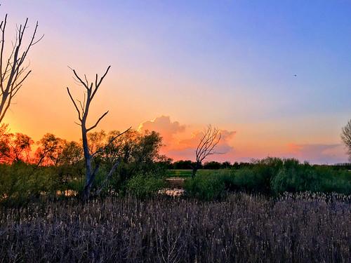 Sunset over marsh at Jones Meadow Park 20180509