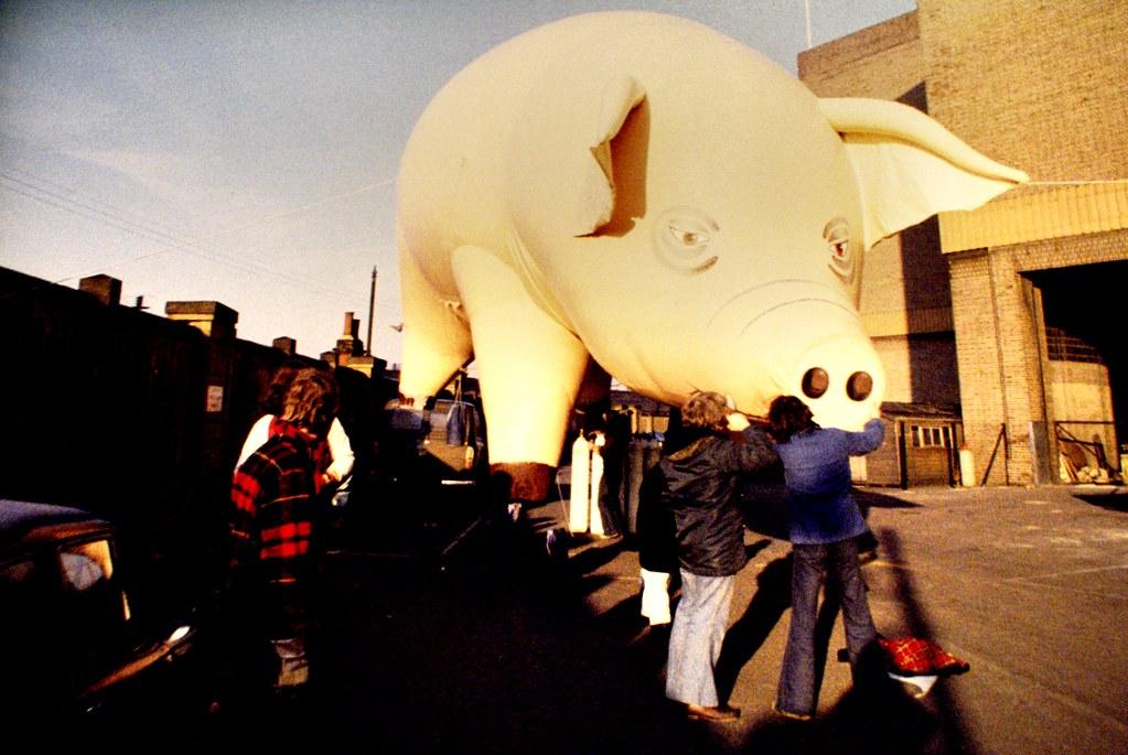 "Expo Pink Floyd au Macro de Rome : Le cochon de ""Animals"""