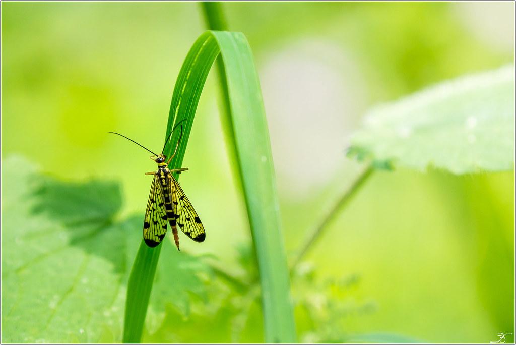 Envie d'insectes 41580264094_fc8d112993_b