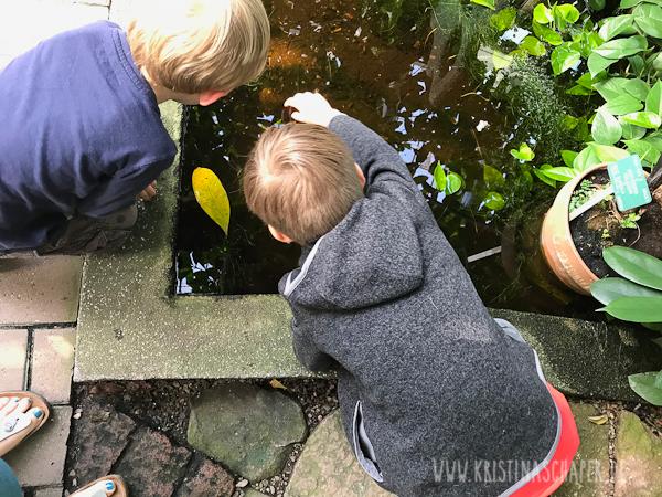 Botanisk_Have_Copenhagen_9546.jpg