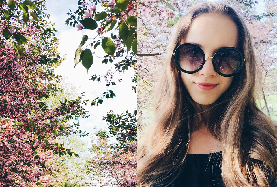 cherry-blossom-roihuvuoren-kirsikkapuisto