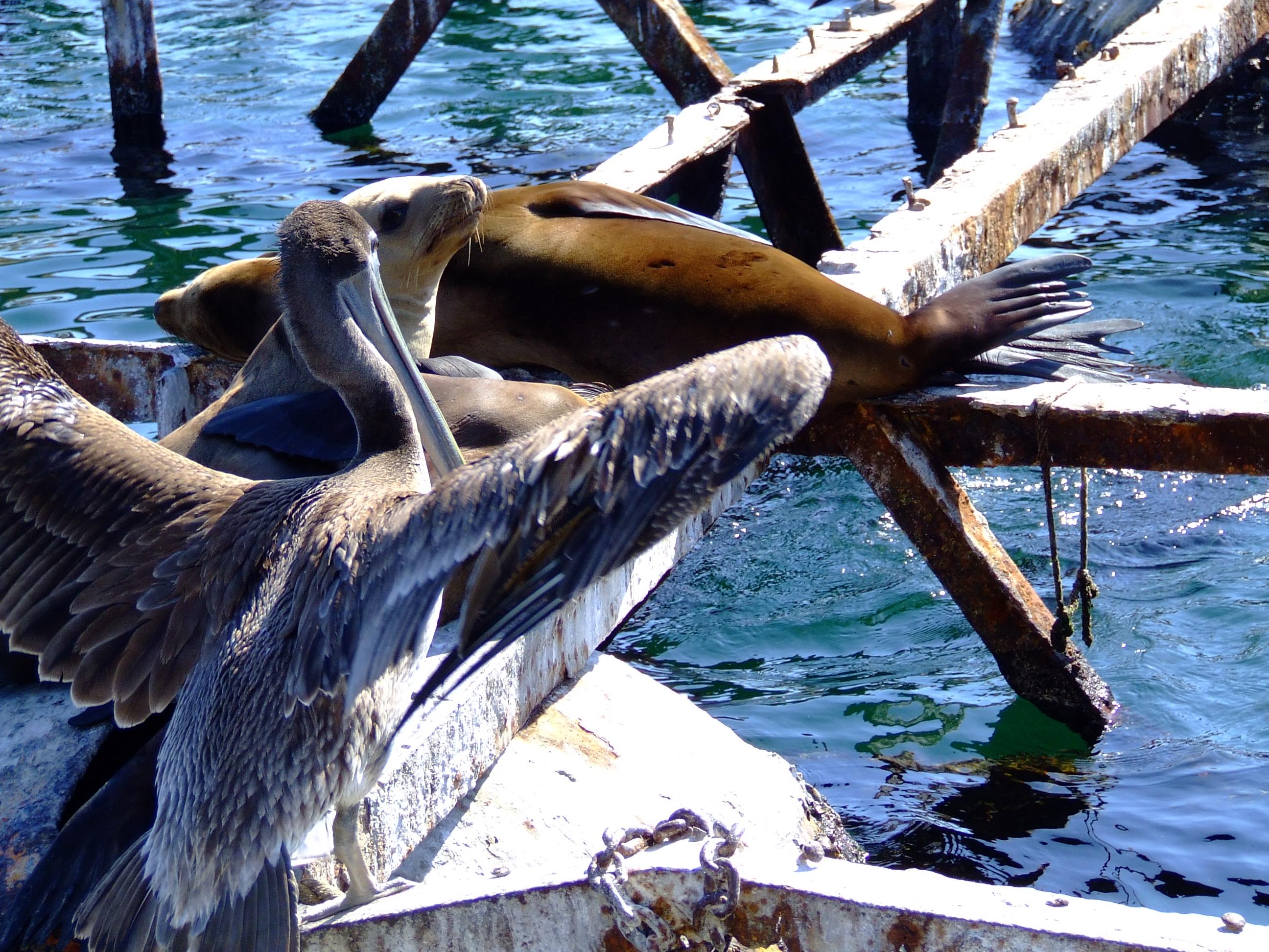 Redondo Beach Vacation Rentals