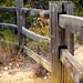 Fenceline by dewaun.simmons