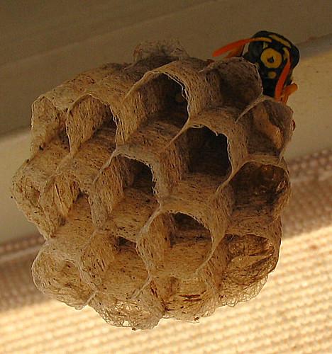 nido di vespa e wespen nest waspnest flickr photo sharing. Black Bedroom Furniture Sets. Home Design Ideas