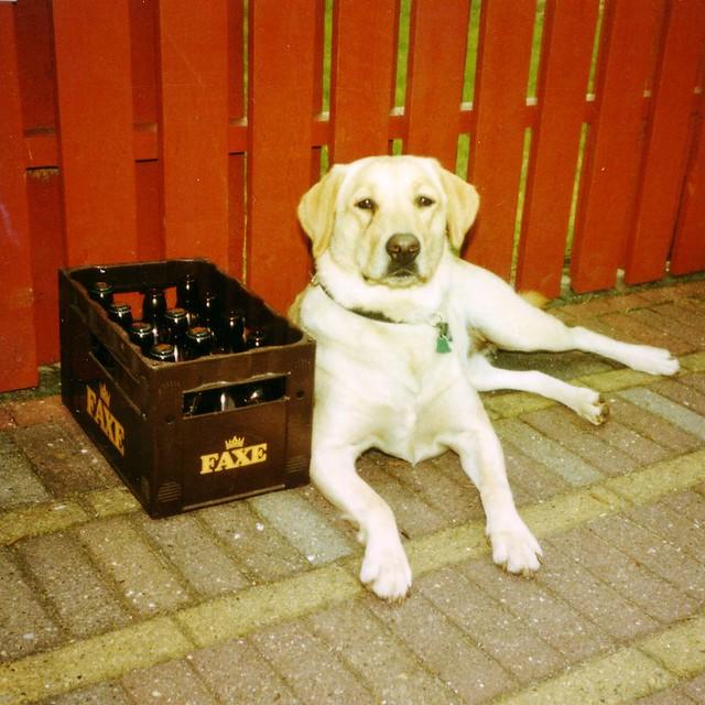 Urlaub Mit Hund Im Hotel In Deutschland