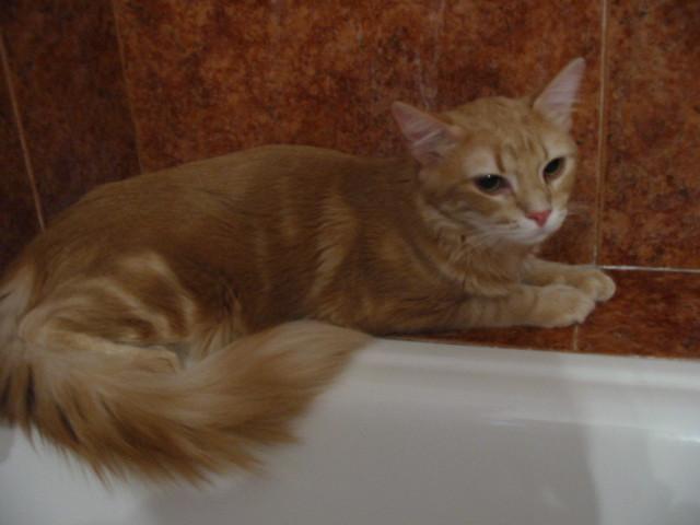 Tinas De Baño Para Mobile Home:Plinio se esconde en el baño