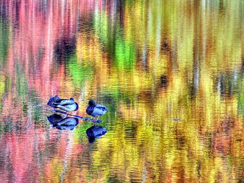 autumn lake reflection fall topf25 water colors birds log topf50 topf75 500v20f listeningto nj ducks foliage watchung topf100 hdr brucespringsteen thesmiths eriecanal iso50 louderthanbombs 1000v40f 115second thanksj 89mm nikonstunninggallery f74 133ev omarydontyouweep 35mm350mm world100f