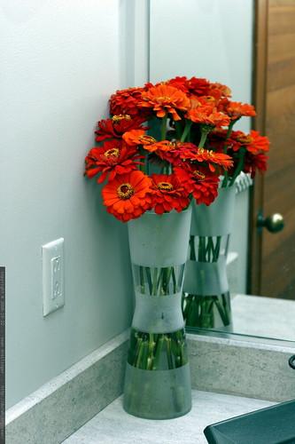 orange zinnia bouquet    MG 2908