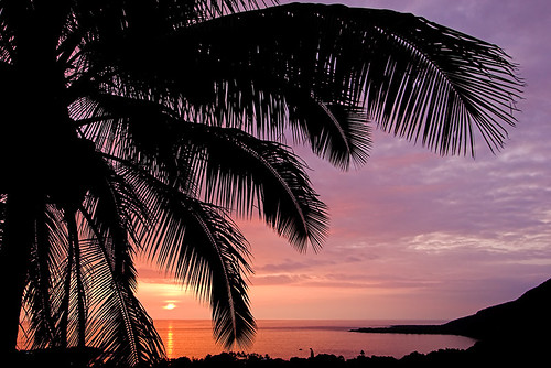 sunset silhouette hawaii bravo coconut palm bigisland kona kealakekuabay 30123