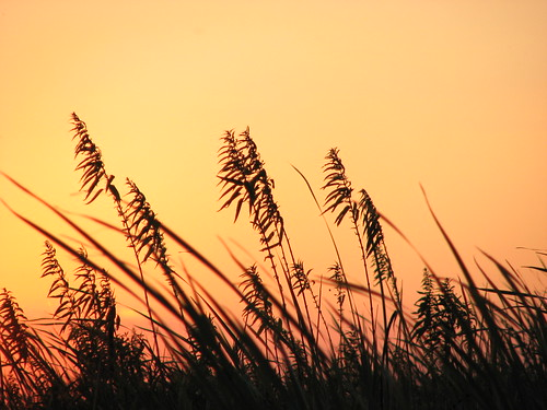 In the marsh at sunset