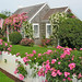 Rose-covered house on Nantucket