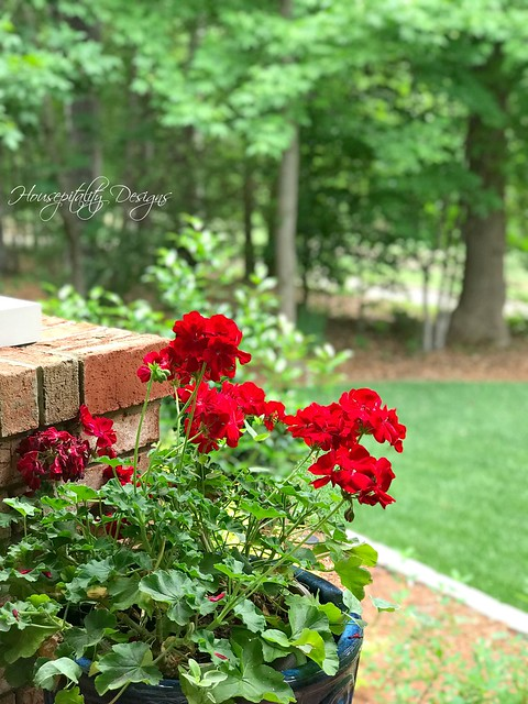 Geraniums-Housepitality Designs