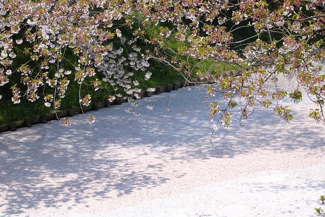 Sakura ditch