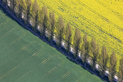 Trees In A Row - 04