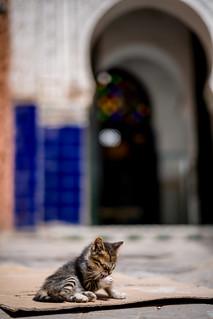 The fauna of Marrakesh