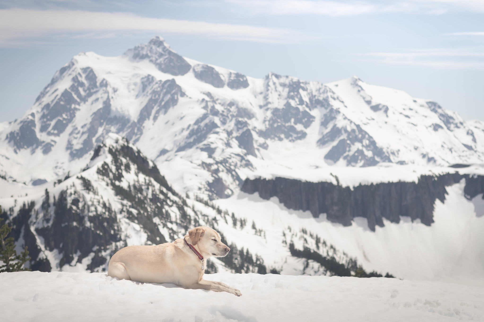 Summit dogs on Barometer Mountain