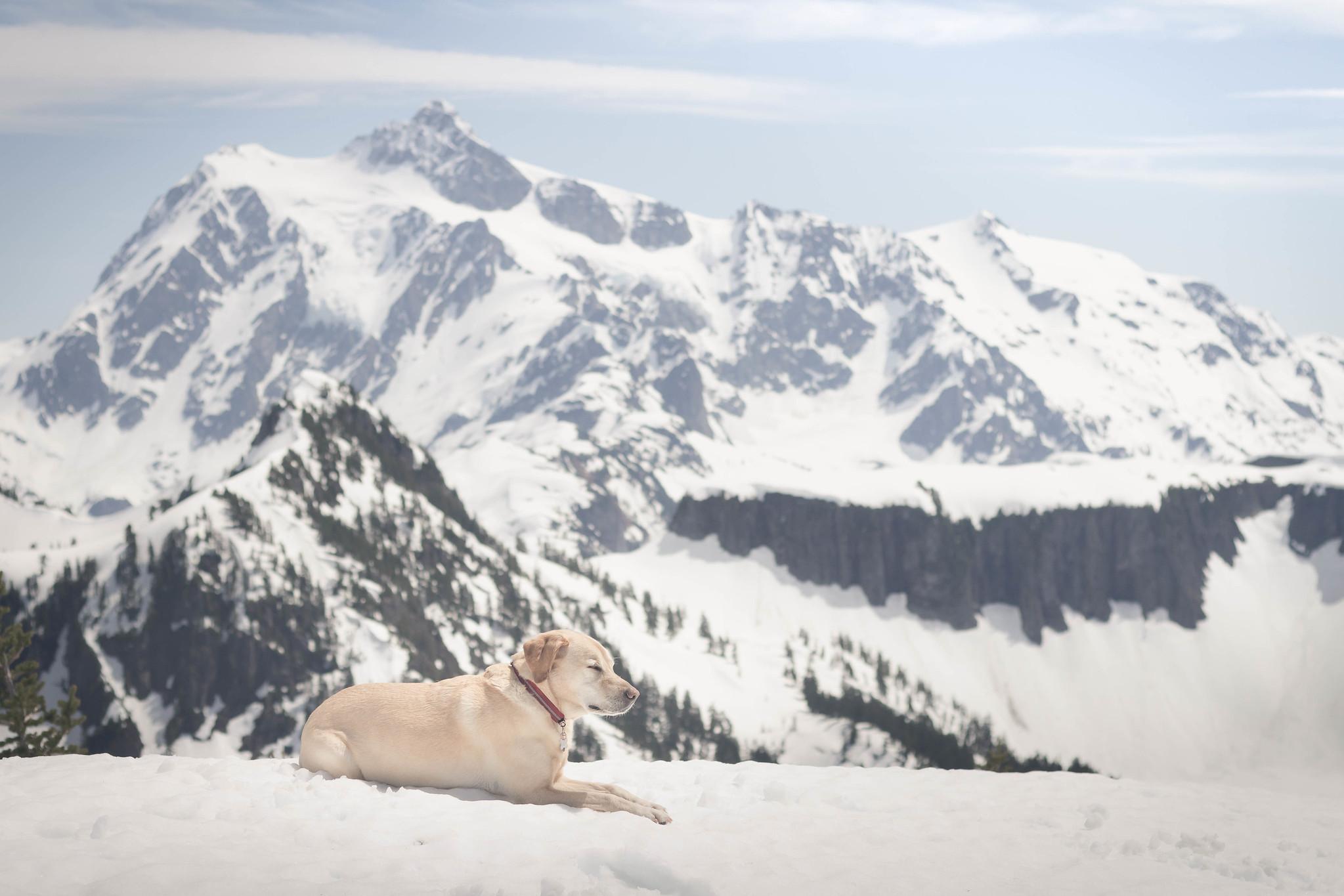 Summit dogs on Barometer Mountain