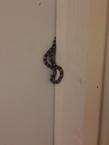 Snake Visit