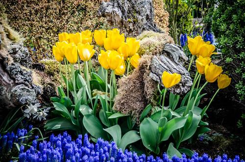 Skagit Valley Tulips-114