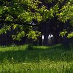 Green colors - https://www.flickr.com/people/134205948@N02/