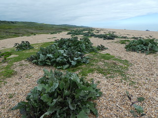 20180504_13 Chesil Beach begins 15.28.25