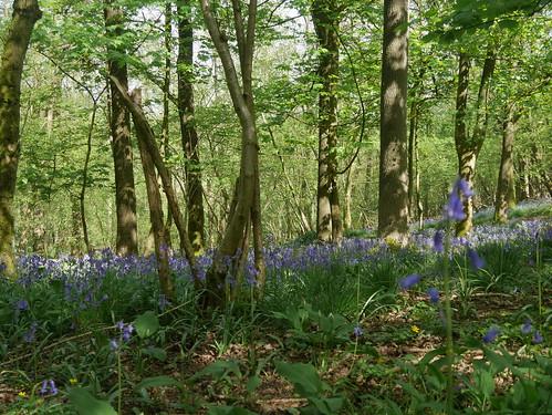 Withington Woods