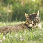 20180508-182940 Cat Garden Bokeh
