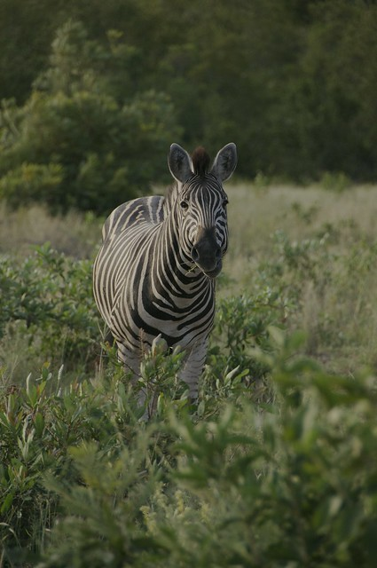 Africa 2018_SouthAfrica_072