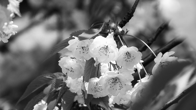 spring petals 02