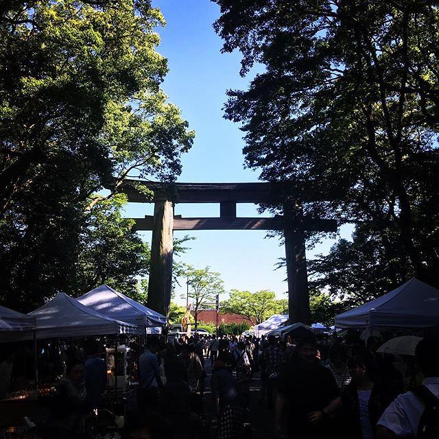 たま茶、護国神社蚤の市in博多2日目。最高のお天気!フードブースにてお待ちしております〜 #蚤の市