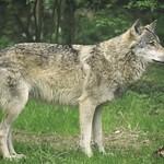 20180429-155046 Wolf & Futter