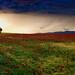 Amapolas en la tormenta (serie amapolas - n. 7)