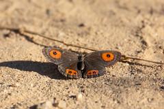 Madagascar 2018 - Camera IV - 02258.jpg