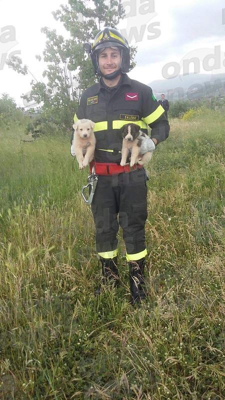 Cagnolini salvati dai Vigili del Fuoco