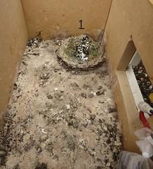 Gierzwaluw nestkast 1 na openen 13 april 2013.