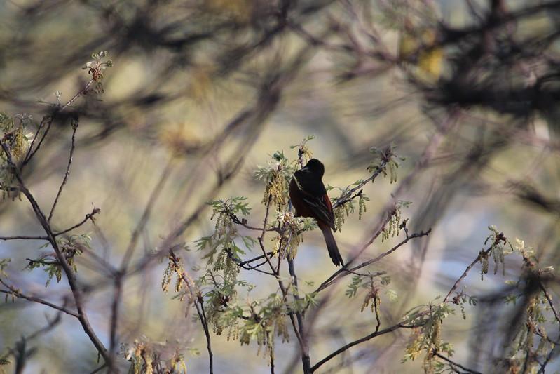 Spring Birds 2018