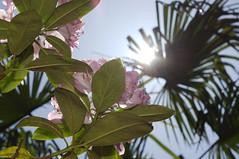 Visite des jardins Agapanthe