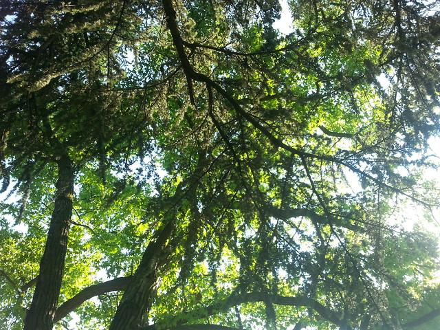 Bonn Botanic Gardens Trees