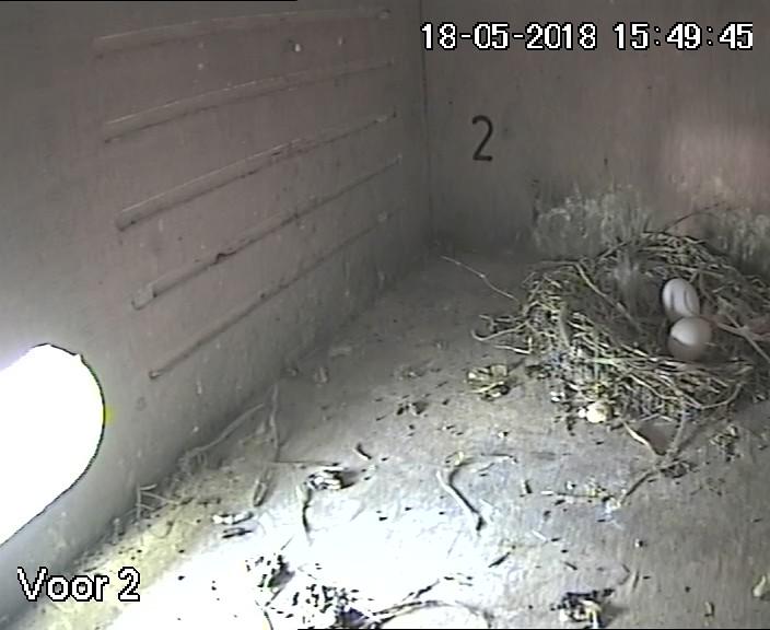 Twee eitjes in nestkast 2, 18 mei 2018