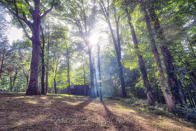 Light Through The Trees, 2018.05.12