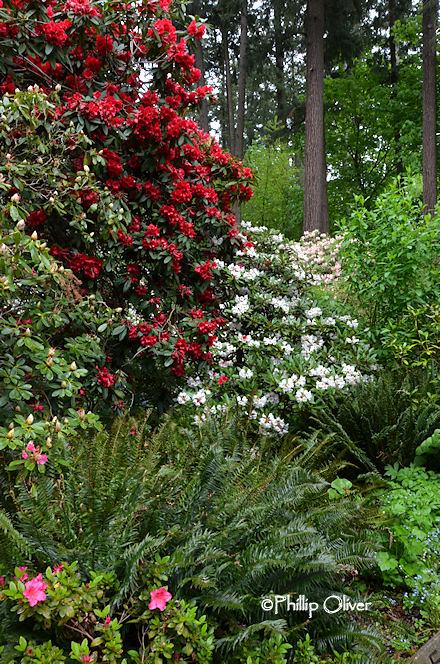 cecil-smith-garden-3