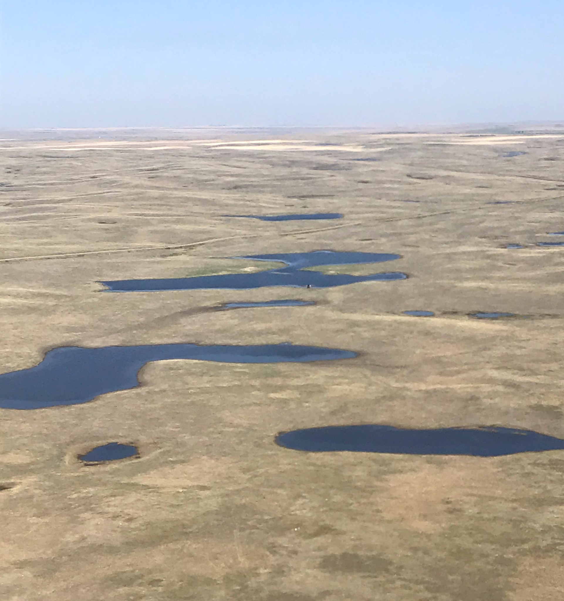 The short-grass prairie area west of Empress, Alberta, this spring has some of the best wetland and upland habitat conditions in recent memory. Most of the wetland basins in this area have water in them, with many of them full. (USF&WS photo by Jim Bredy)