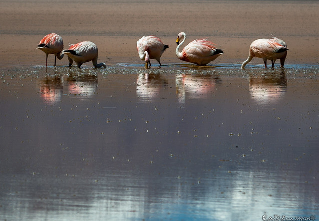Cold Flamingo Time