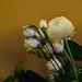 Cut flowers by cannam