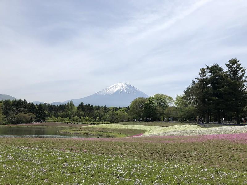 iPhone X - Fuji Shibazakura Festival (Mount Fuji)